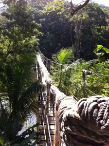 suspension bridge at Gumbalimba Park
