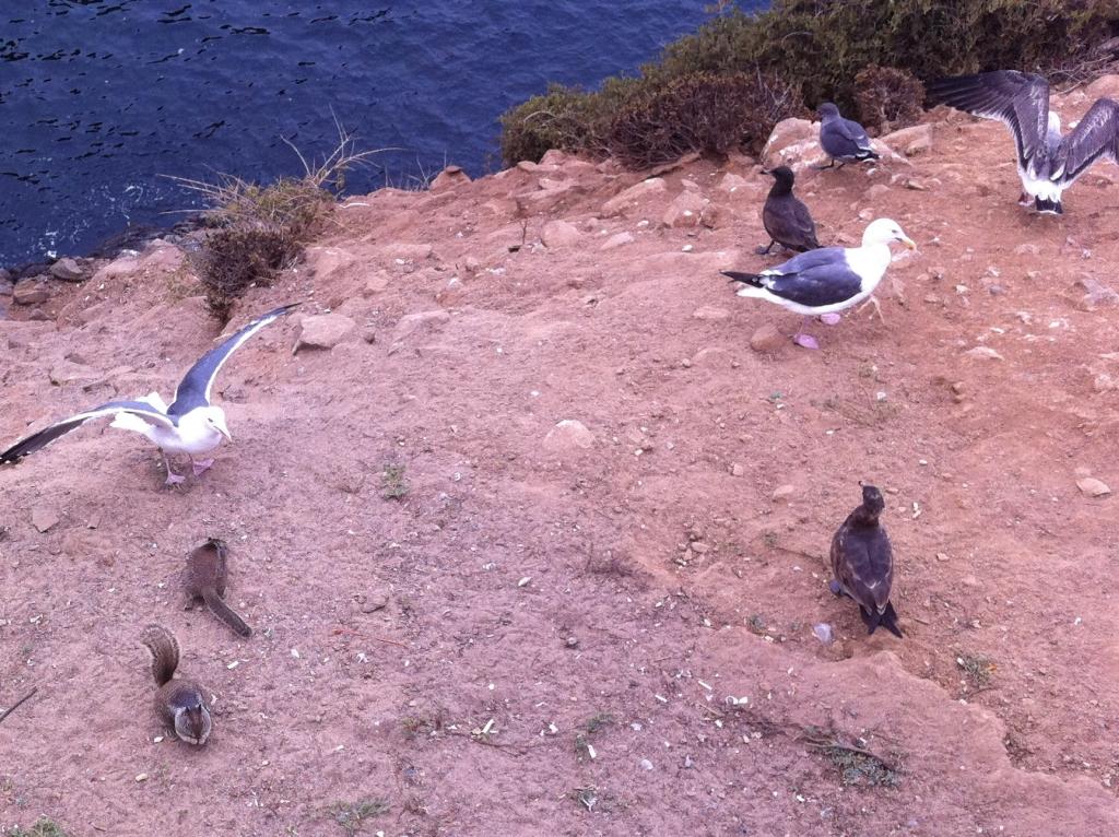 Seagulls at La Bufadora
