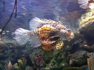 fish tank in Las Vegas