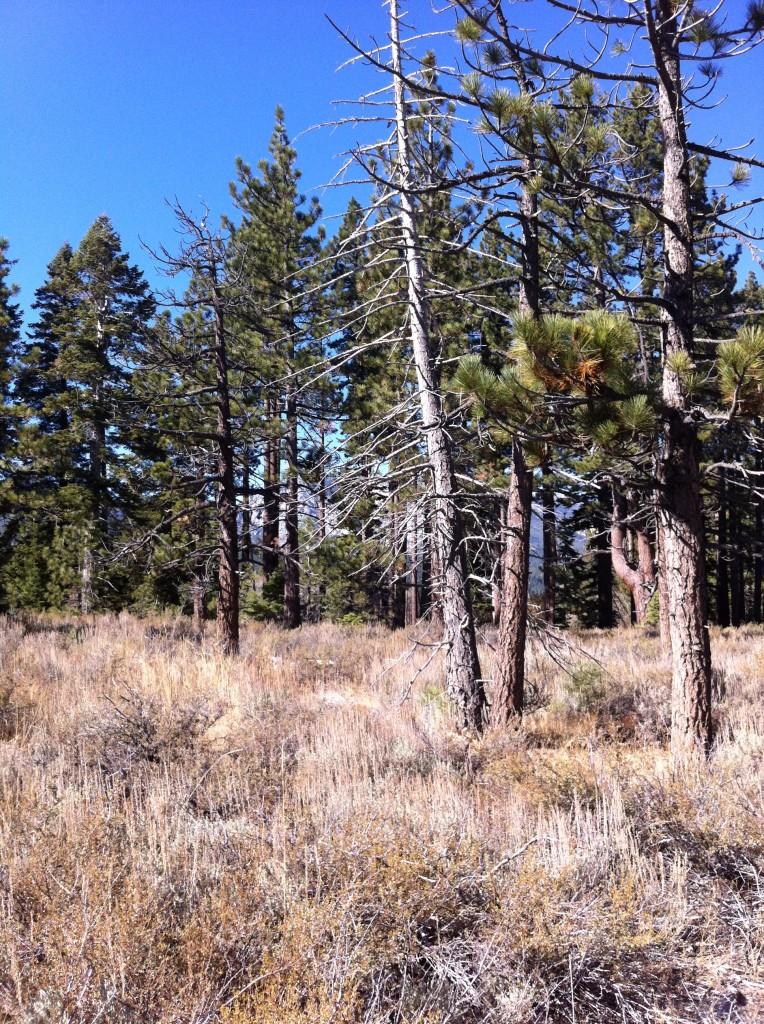 Camp Richardson Lake Tahoe