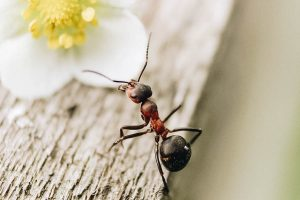 Ant on a Board