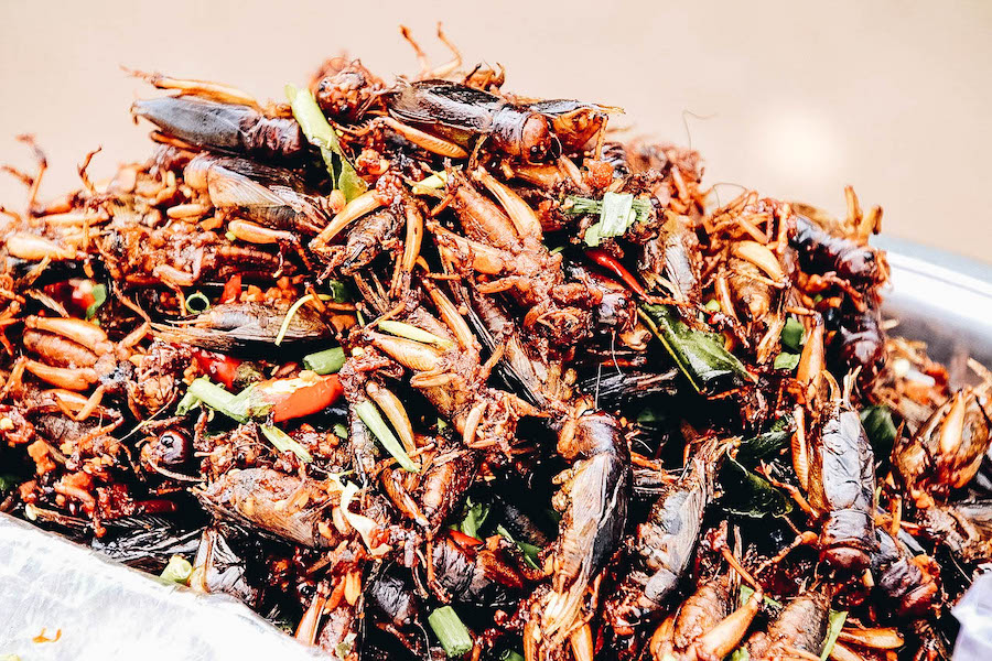 Edible cockroaches for sale and ready to eat