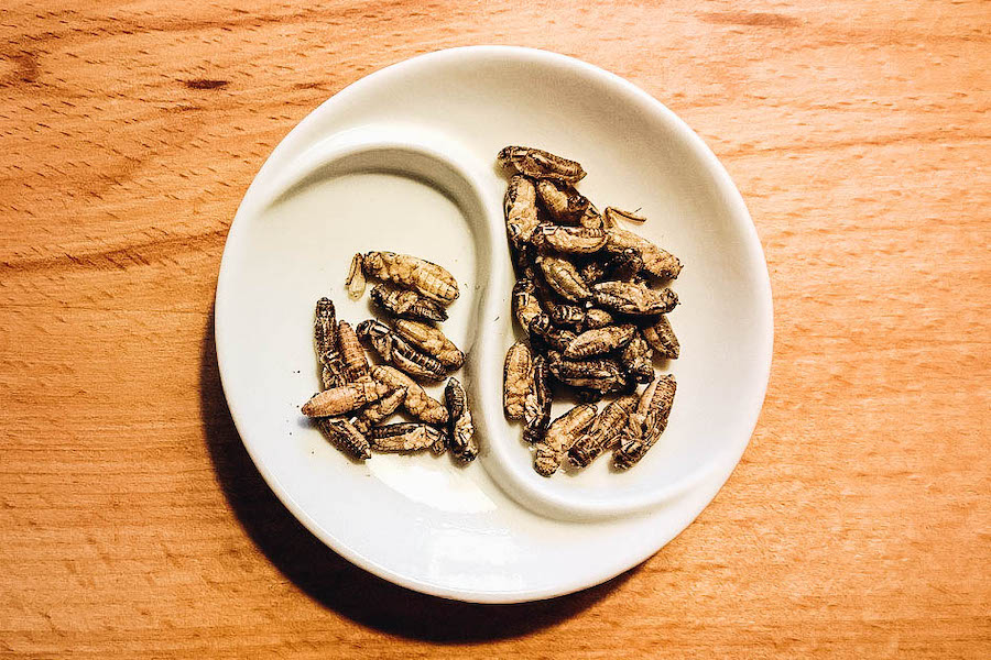 Crickets in a bowl