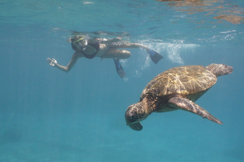 Annette White Swimming with Sea Turtles