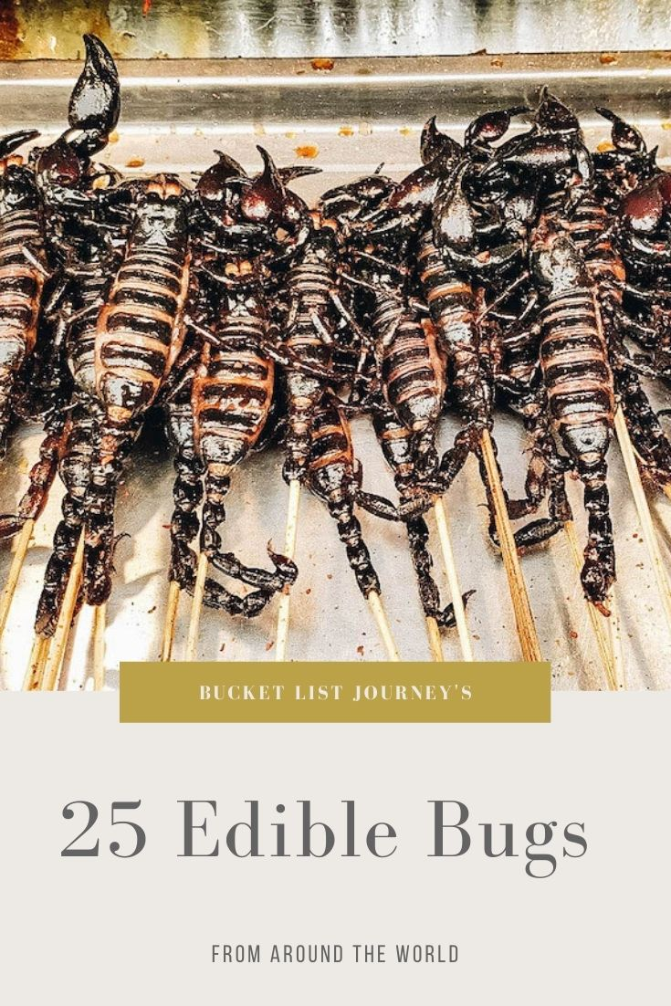 Edible Bugs Bucket List: Insects People Eat Around the World