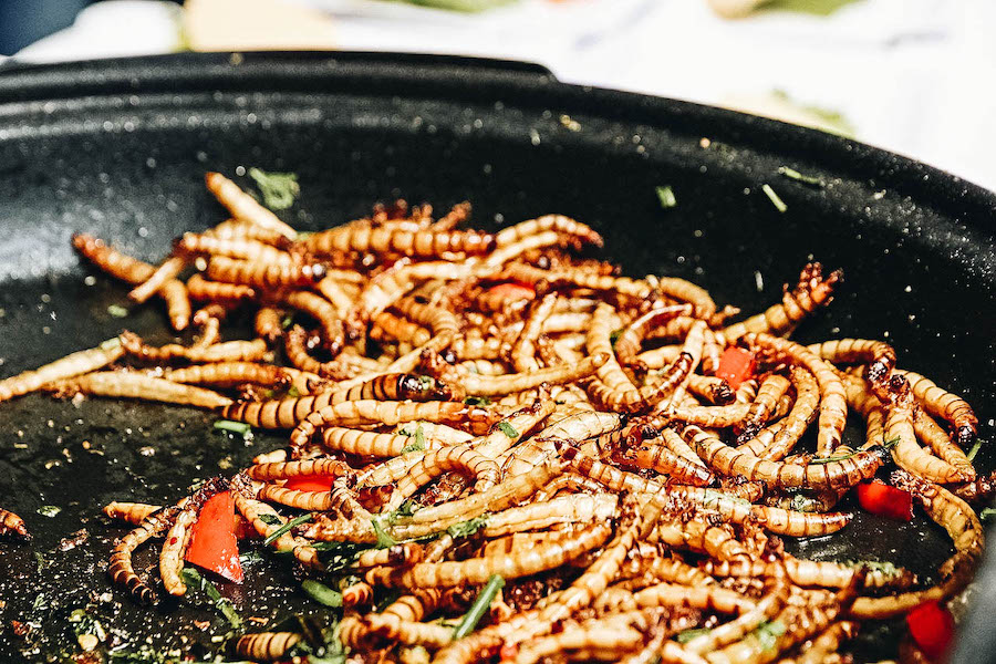 Fried Mealworms in a bowl ready to eat