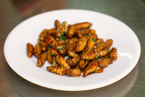 Edible Bugs Pictures of Silk Worms