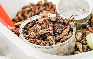 Fried grasshoppers in a bowl
