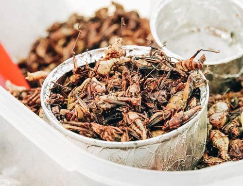 Edible Bugs Bucket List: 25 Insects People Eat Around the World