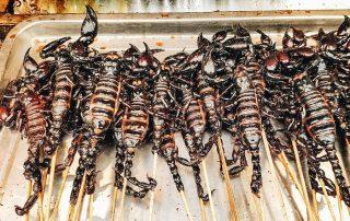 Edible Scorpions on a Stick