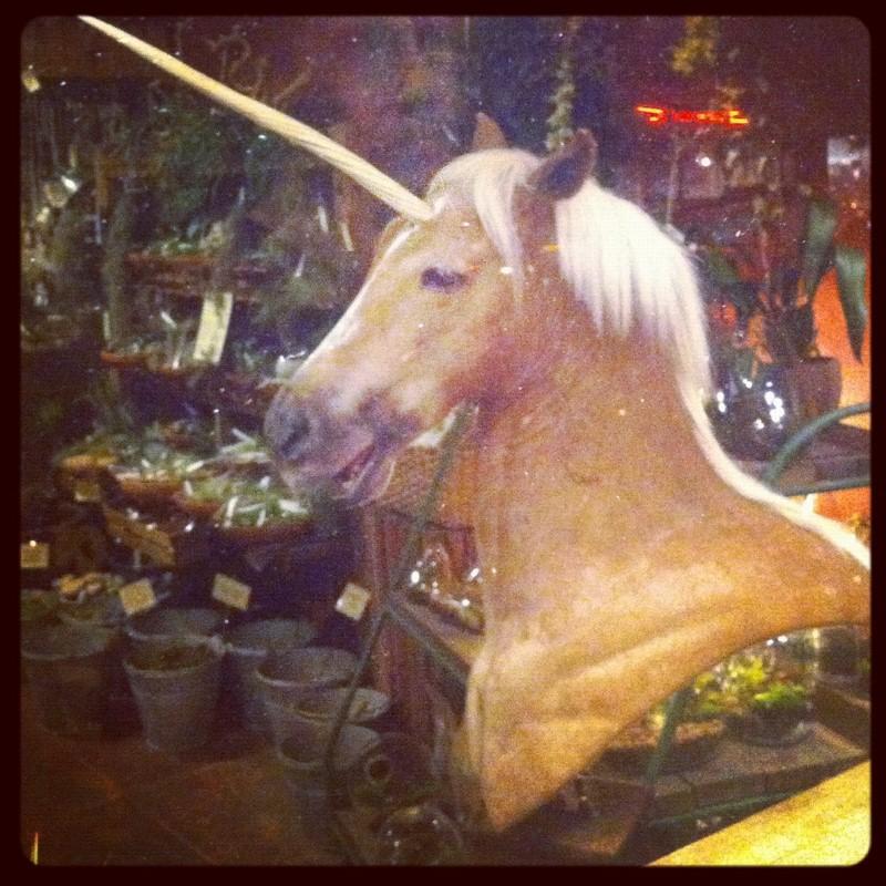 Unicorn at Paxton Gate