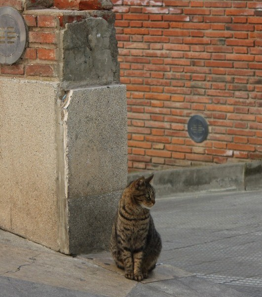 Cats of Sitges