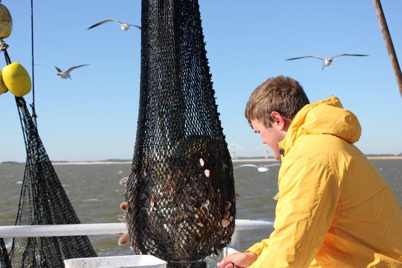 The Shrimping Net Catch
