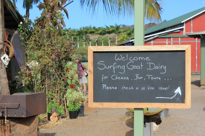 Surfing Goat Dairy Sign