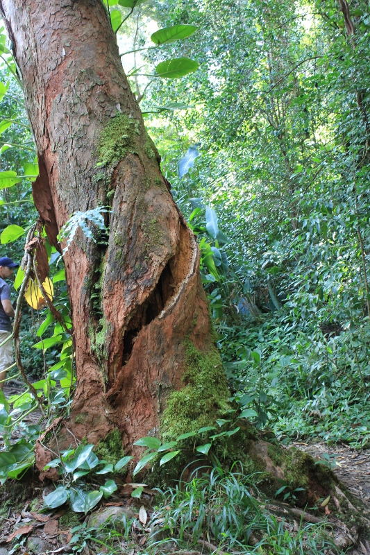 Waikamoi Nature Trail: One of the Best Road to Hana Stops on the Hawaiian Island of Maui