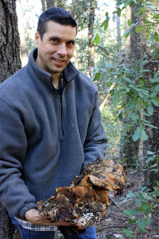 largest wild mushroom