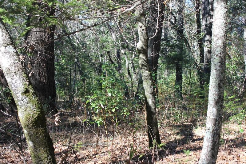 mushroom hunting woods