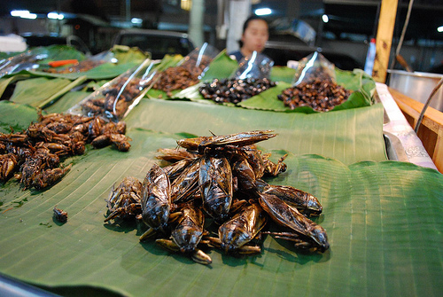 Edible Bugs in Chiang Mai