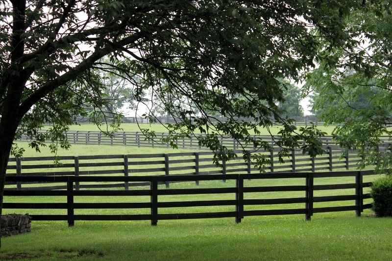 Touring A Thoroughbred Horse Farm In Kentucky