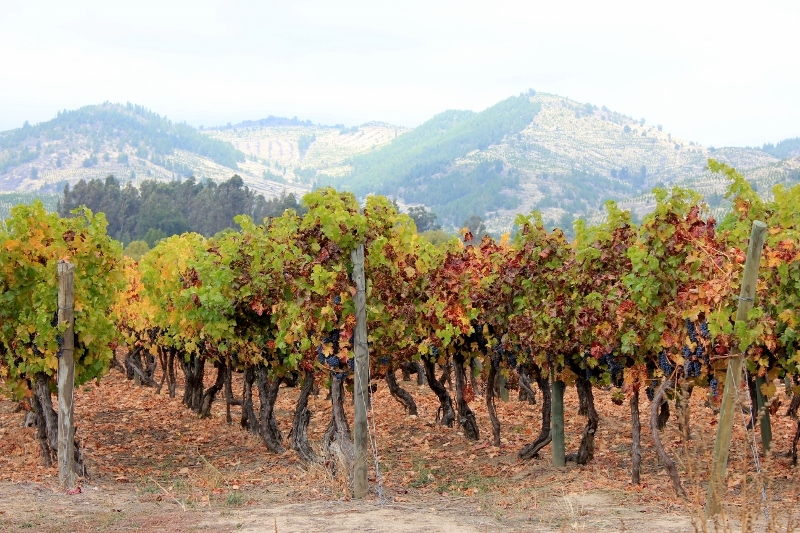 J. Bouchon Vineyard Chile