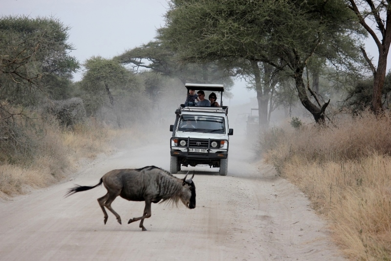Things to do Before You Die: Go on an African Safari