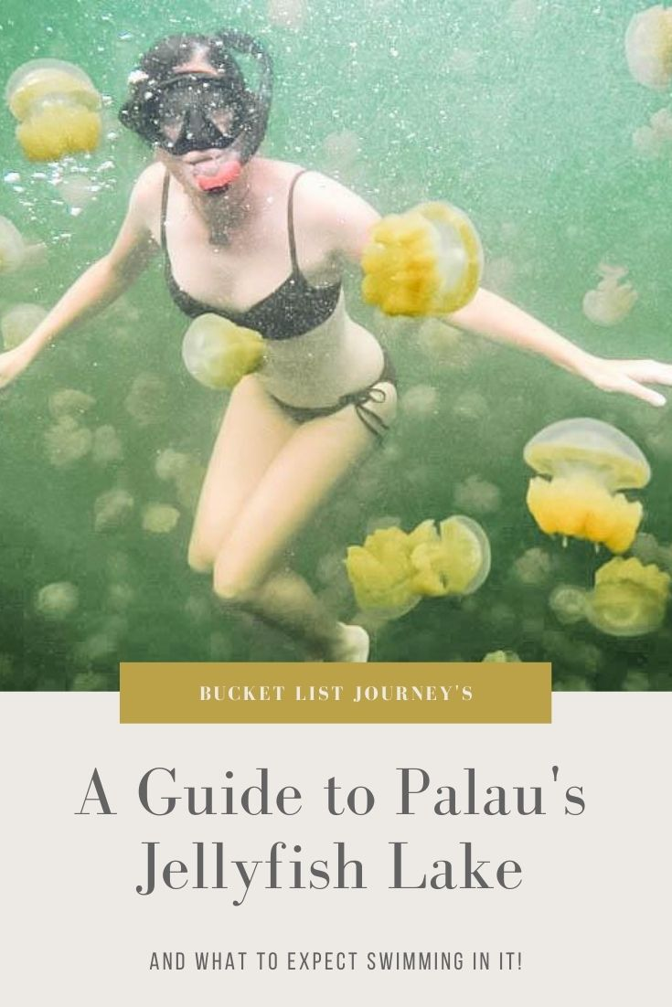 A Guide to Swimming in Palau's Freshwater Jellyfish Lake