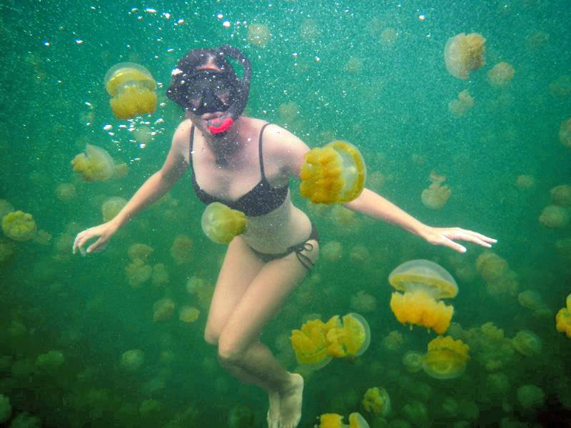 Jellyfish Lake in Palau: Ultimate Travel Bucket List: 50 Best Experiences & Must See Destinations
