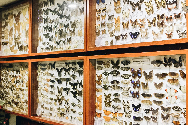 Chiang Mai Attraction: Insect Museum