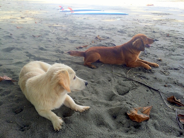 The dogs at Playa Pandulce in Costa Rica