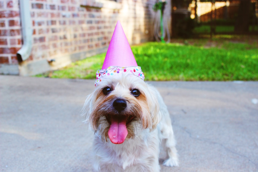 Have a Birthday Party: Dog Bucket List: 22 Fun Things to do With Your Furry Pet