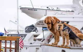 Dog Bucket List: 22 Fun Things to do With Your Furry Pet