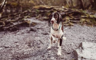 Hike a Trail: Dog Bucket List: 22 Fun Things to do With Your Furry Pet
