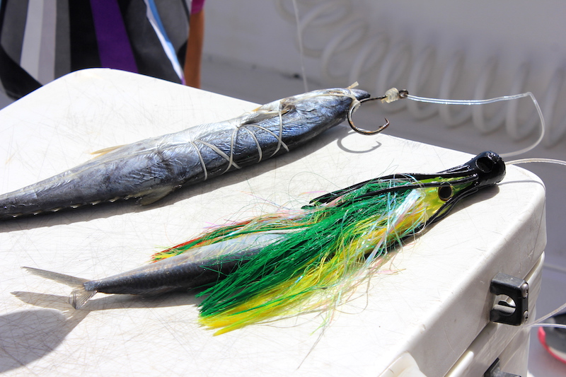 Sailfishing Bait in Guatemala