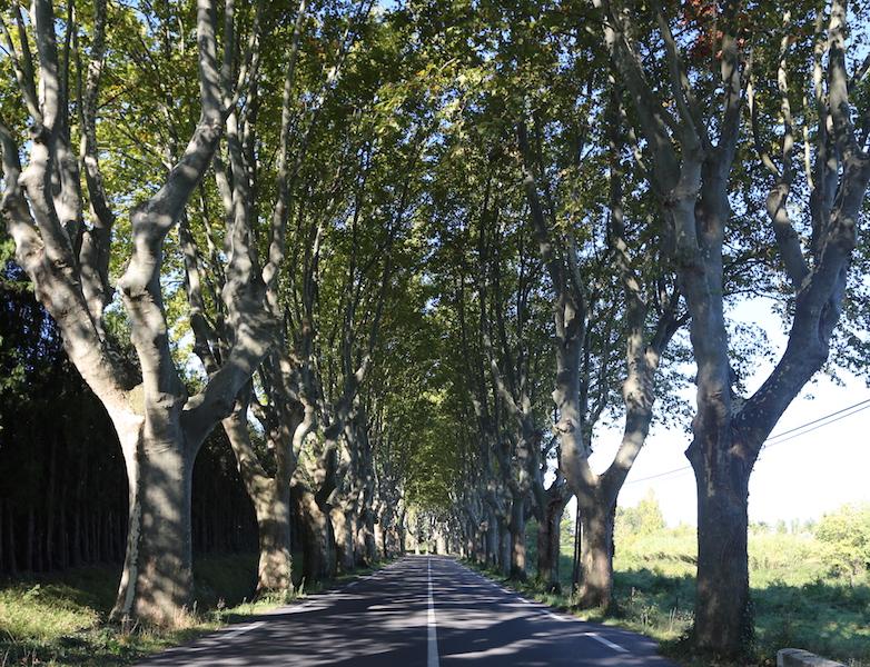 Saint Remy South of France
