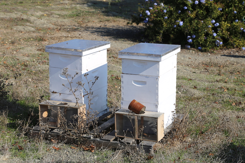 Bee Hives in Petaluma Beekeeping