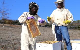 Annette White Beekeeping in Petaluma