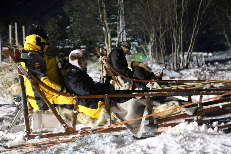 Dog Sledding Tromso Norway