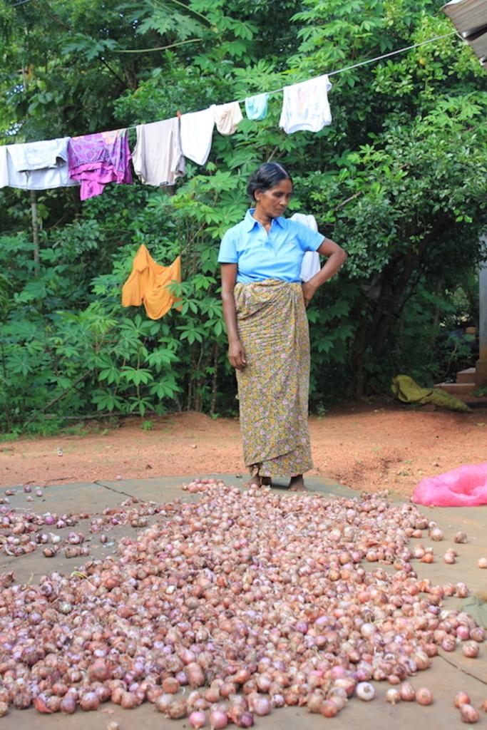 Cultivating shallots on the Hiriwaduna Village Trek in Sri Lanka