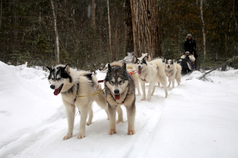 Dog Sledding: Winter Bucket List: 60 Fun Activities & Things to Do