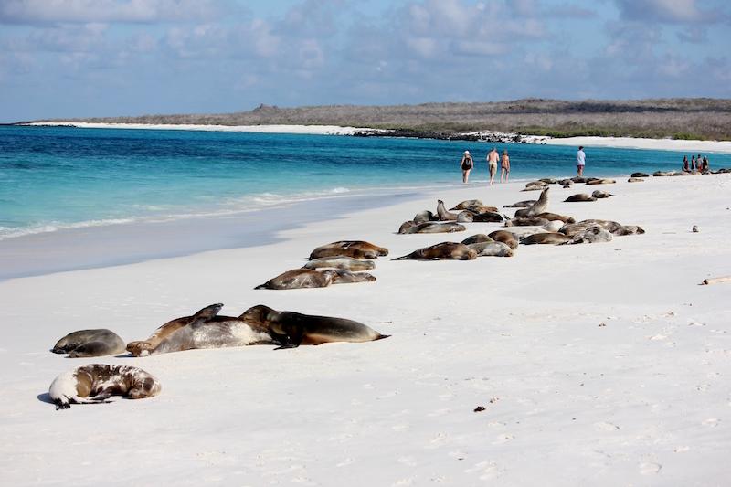 Espanola Beach in the Galapagos Islands