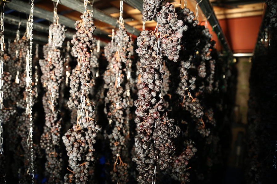 Drying grapes at Akiu Winery in Sendai, Miyagi