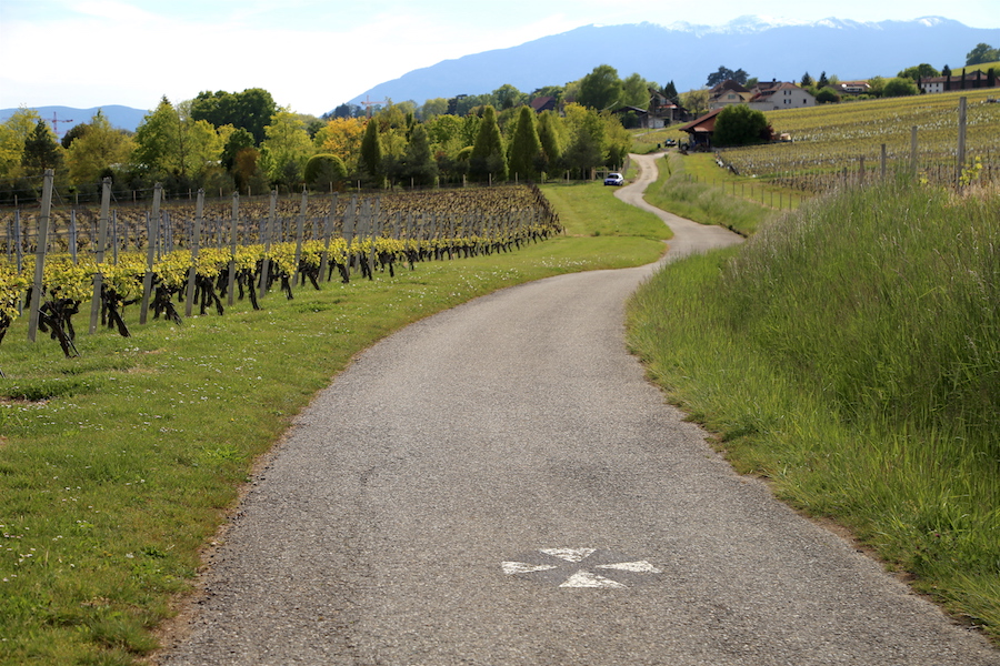 Geneva Bucket List: Top Things to Do in Switzerland's Second Largest City