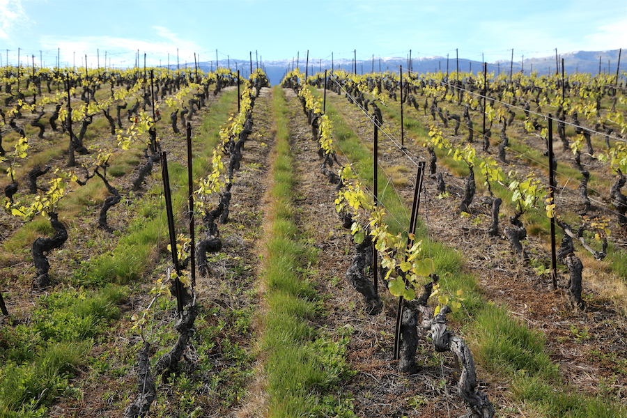 The Vineyards | Geneva Bucket List: Top Things to Do in Switzerland's Second Largest City