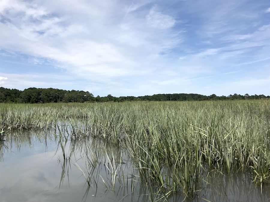 The salt marsh on the Eastern Shore of Virginia