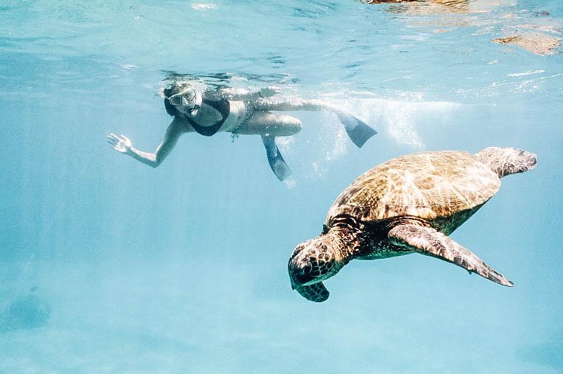 Swimming with sea turtles in Maui Hawaii