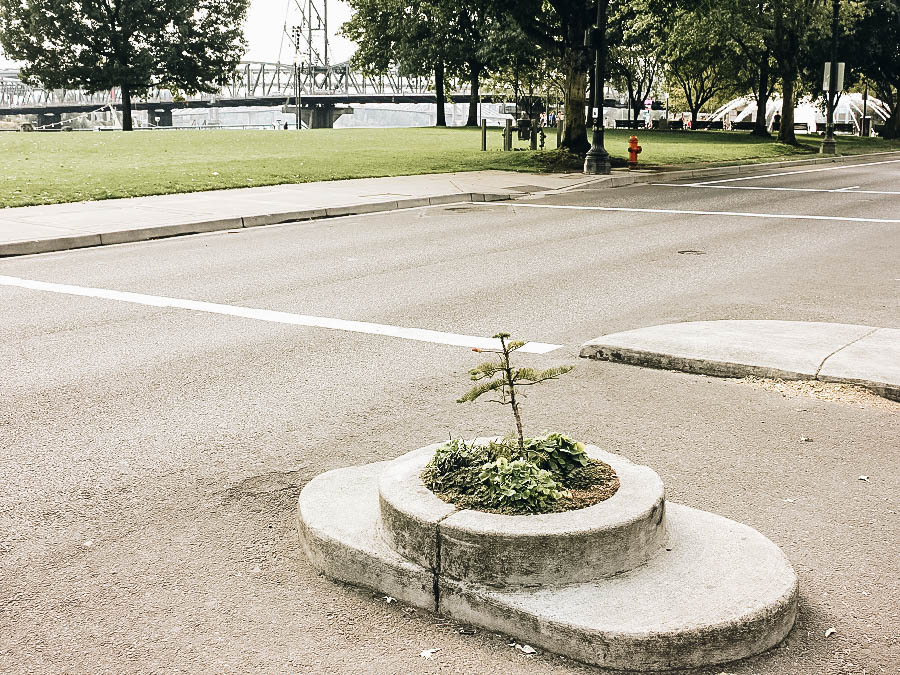 See the Smallest Park in the World
