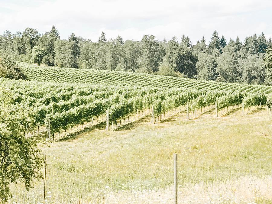 Visit Willamette Valley Wineries
