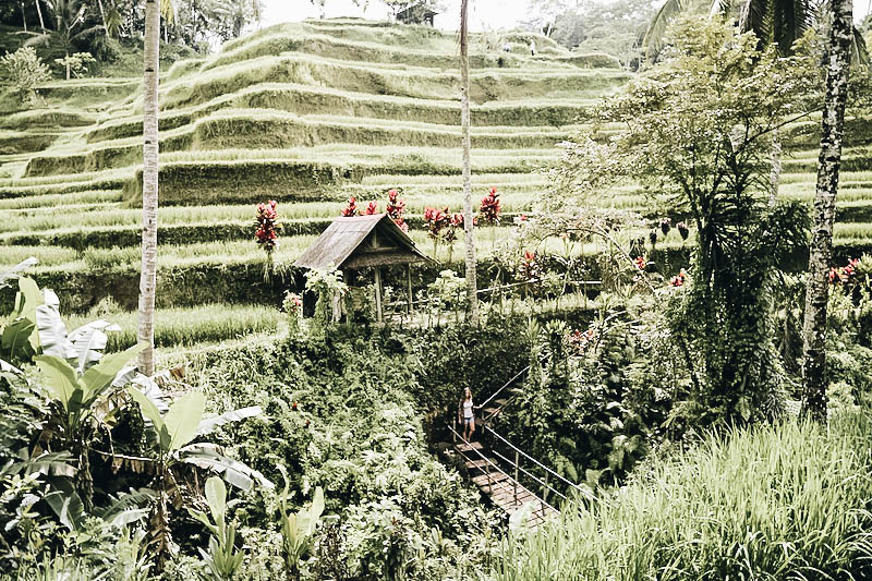 alk through a Rice Terrace in Indonesia