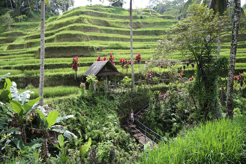 Bali Points of Interest: 1-Day Itinerary in Indonesia's Popular Cruise Port