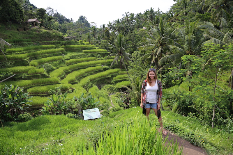 Bali Cruise Points of Interest: Tegalalang Rice Terraces
